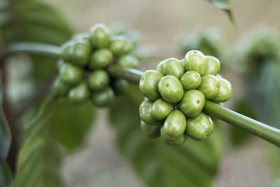 coffee-1869340