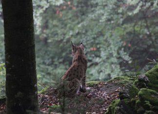 Bavorský les